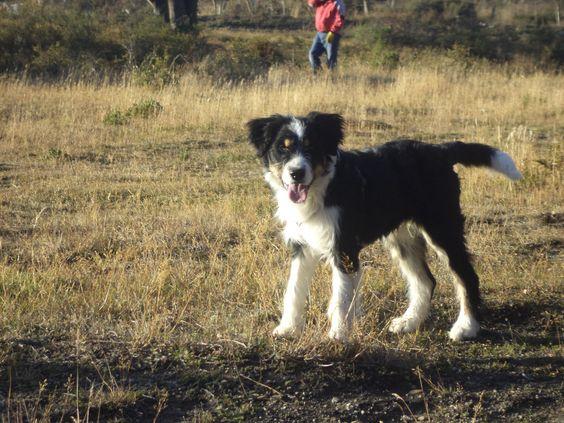 es mi perro  se  llama Polo    y  es hermoso
