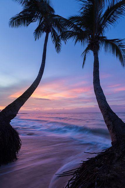 tulipnight: Jamaican Palms by mital01 on Flickr.