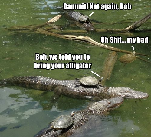 silly, forgetful turtle