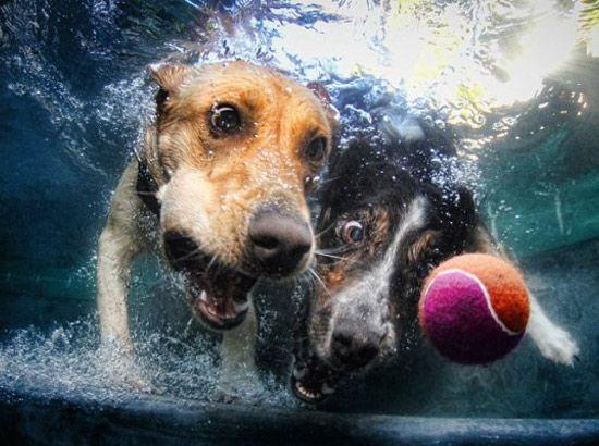 Art et piscines, ou comment photographier des animaux sous l'eau