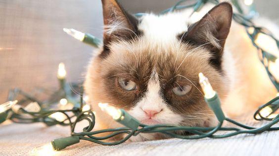 No todos los #Gatos son felices en #Navidad... :P @Candidman
