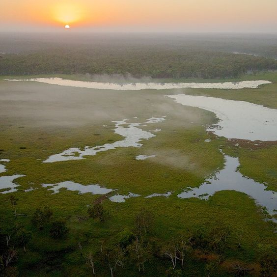 """@Tim Laman photo of sunrise over Green Swamp in the @AustralianWildlifeConservancy Piccaninny Plains Sanctuary.  This wetland is the kind of water source…"""