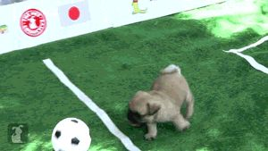The World Pug 2014 and a cute little kitty goalie!  :)