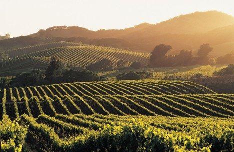 Vineyards of Napa Valley...ohhh how I love Napa...