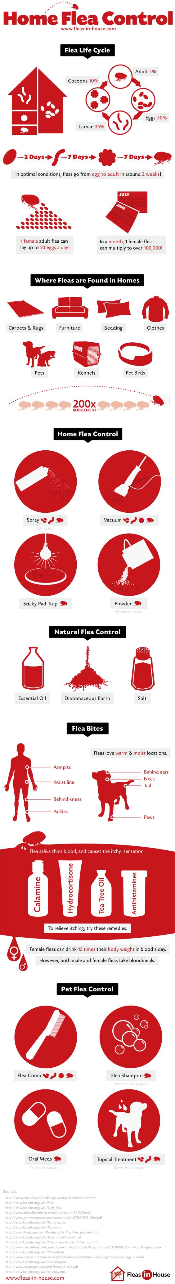 Thisgraphic Showsrmation About Fleas In Homes This Includes Their Life  Cycle, How Fast They Reproduce