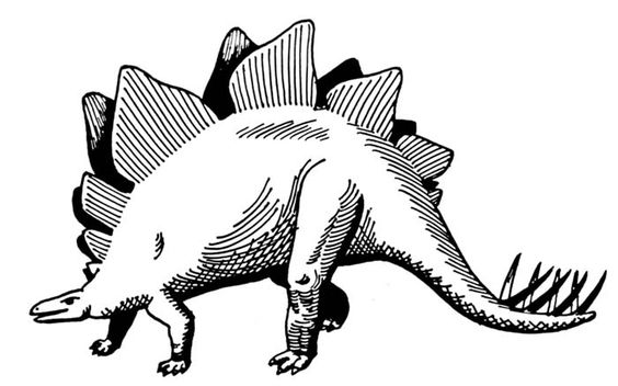 Black White Stegosaurus Drawing Dinosaur Drawing Dinosaur Silhouette Dinosaur Pictures