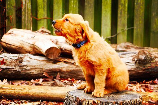 Excessive Barking Understanding Why Your Dog Is Barking And