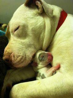 Faça dos teus braços, um lugar seguro para quem te ama... <3 Make your arms be a safe place for the ones that love you... <3