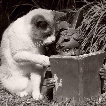 just cat being cat