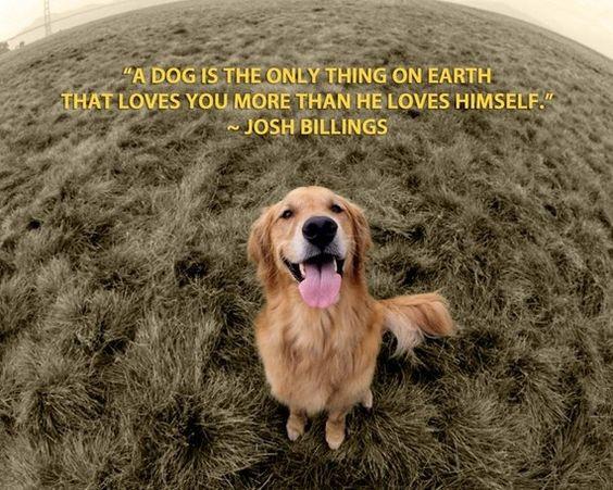 So true! cute-critters