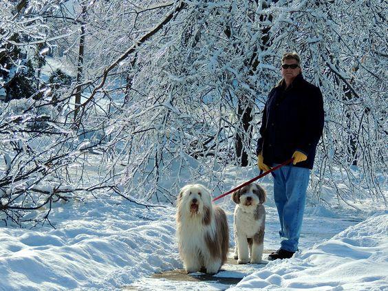 Walking in a winter wonderland.  #icestorm2013 #snowdogs