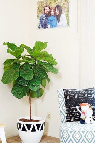 Don't: Limit Plants To Your Living Room - Do's and Don't's Of Decorating With Plants - Photos