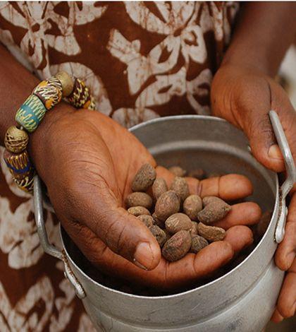 Ilburro di karitè é una sostanza oleosa, solida, nota per le splendide proprietà nutritive ed elasticizzanti a carico della pelle. Viene estratto attraverso una particolare lavorazione dei semi.
