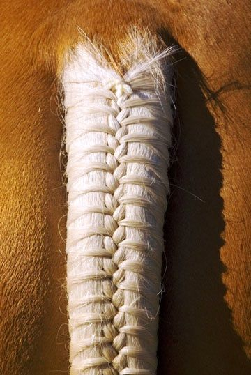 #Horse #tail #braid ToniK
