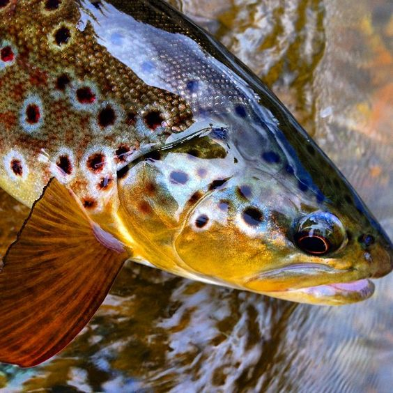 Photo taken by phil tereyla ink361 outdoors and old for Walmart fly fishing