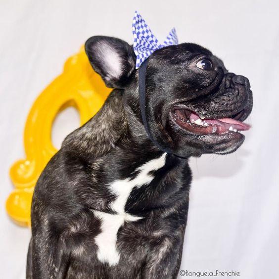Acordando cedo porque quarta feira e dia de pilates vamos cuidar da saúde!! quero ser modelo da @latoemio ________________________________________ #9gag #petmodellatoemio #frenchiegram #petmodel #instagramdogs #bulldogfrances#ilovefrenchies #instapup #dogmodel #frenchielife #dogsofinstaworld #igdogs #aumigosdoig #bullyinstafeature #bullyinstagram #tbt #thefrenchiepost #frenchiephotos #ig_bules #bullypics #batdogs #doglovers #pawpack #bulldogfrances #rolldoggang #lillypetsfriends…
