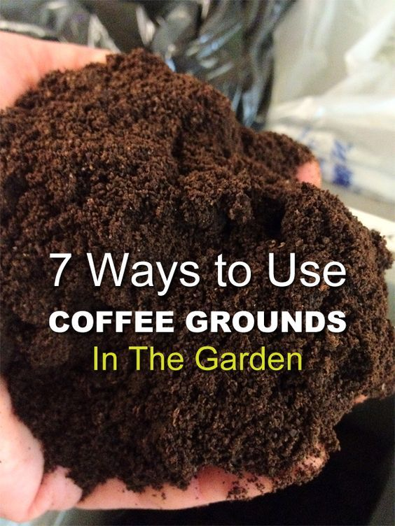 coffee grounds on garden