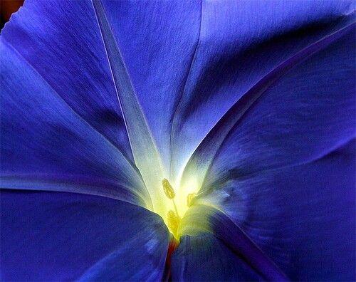 #Glory #flower #blue #magical