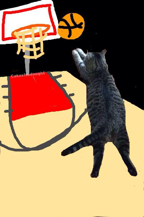 Snap Catz! - Album on Imgur