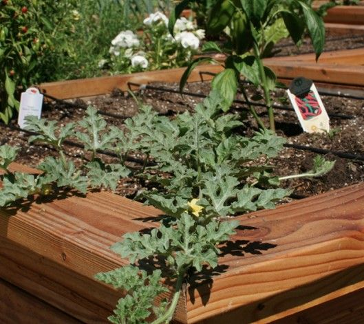 Raised Bed Kit Our Raised Bed Kits All Contain High Quality Irrigation Parts They Are Designed