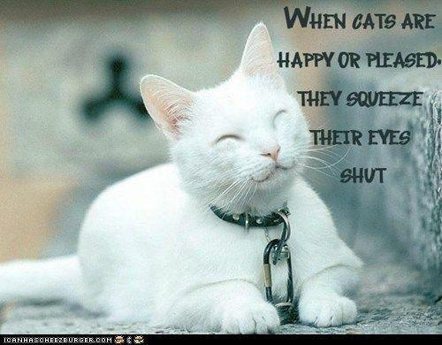 cat info | 100 Fun Cat Facts