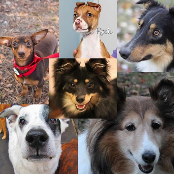 Dogs for adoption or sale in South Carolina http://www.doggielife.com/dogs?rids=41&p=1