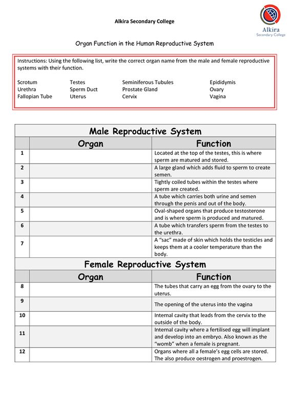 Male Reproductive System Organ Function Female Reproductive System by MikeJenny