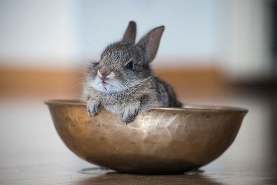 30+ Lovable Bunnies to Put You in the Easter Spirit