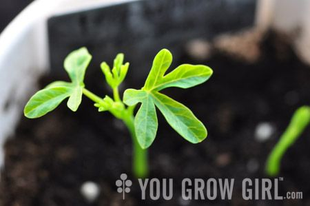 Resources for seed starting from yougrowgirl.com