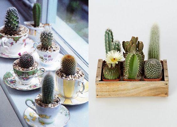 Shopkola | Plantas em lugares fechados | IdeaFixa | ilustração, design, fotografia, artes visuais, inspiração, expressão