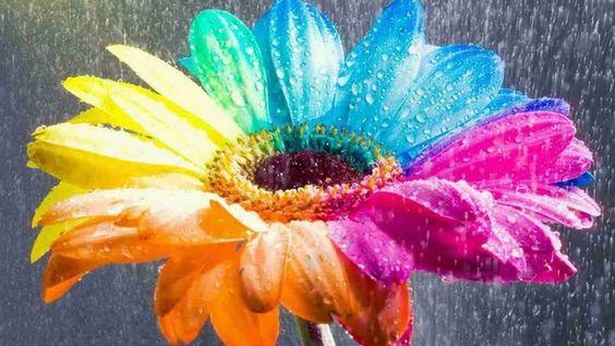 احلى ورود 2017, زهور منوعة اجمل ملونة 2018 1112618_صور-ور�