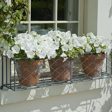 Window box planting tips | Garden Requisites - love this mix of colors and textures - so simple!