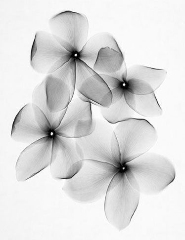 floral radiograph