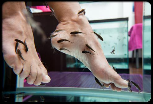 Pinterest the world s catalog of ideas for Fish pedicures illegal in 14 states