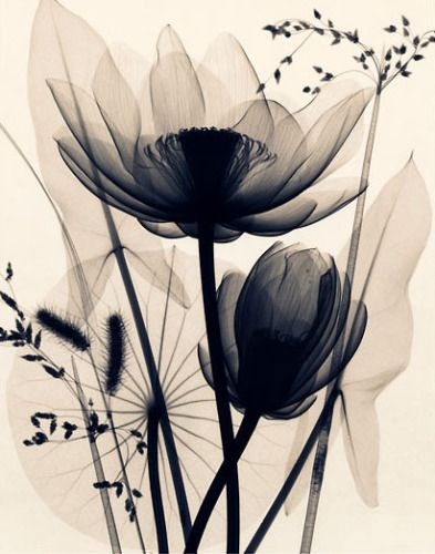 """X-ray flowers. ""    I like this concept.  really interesting.  I wouldn't do this particular composition but the idea is intriguing"