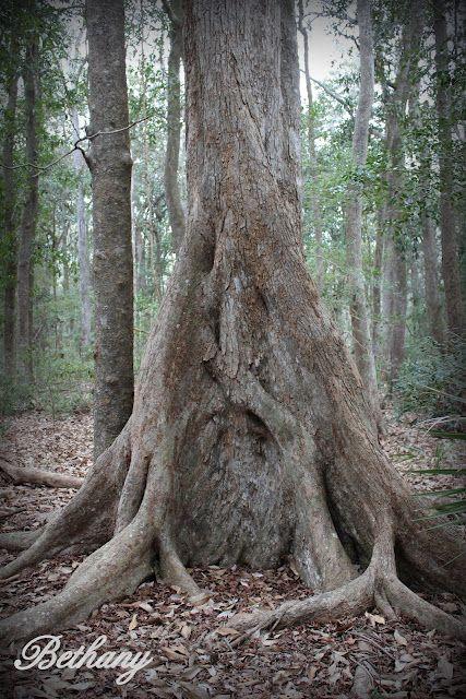 OOOOOOOLD trees