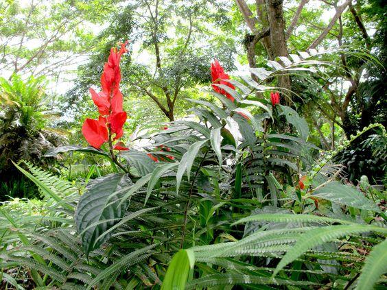 Blütenpracht  auf den Fijis