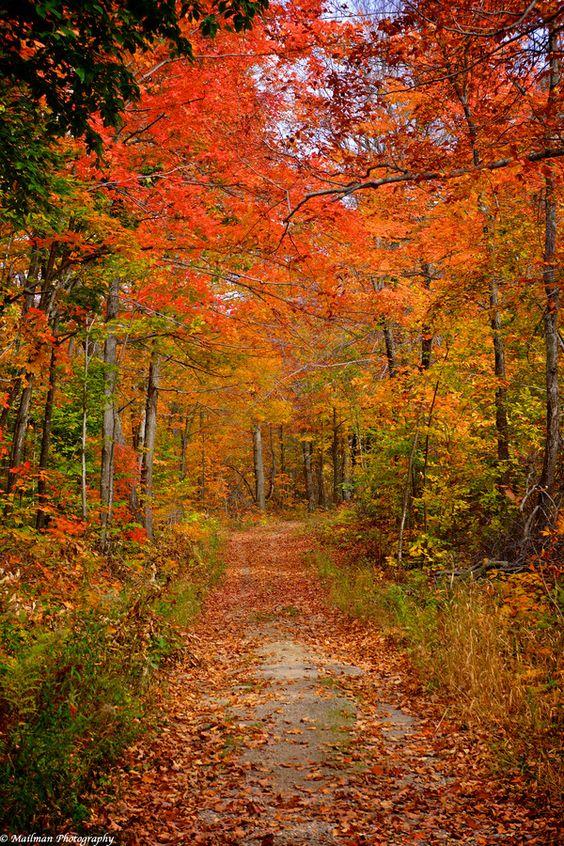 Wolf Trail - Gatineau Park by Al Mailman on 500px