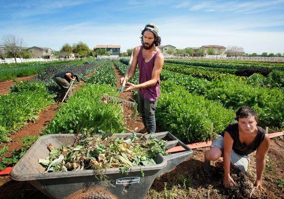 """Cresce nos EUA novo modelo de comunidade planejada com fazendas comunitárias chamado""""agrihoods"""" stylo urbano-4"""