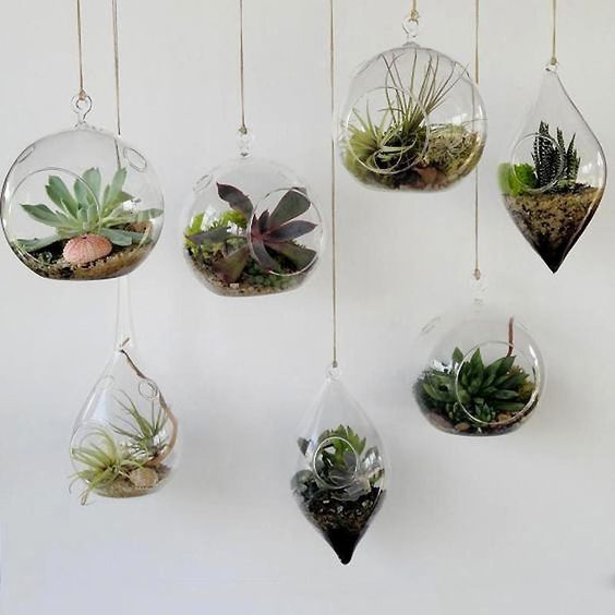 Air plants. easy to care for tolerant plant that is low maintenance and hard to kill.