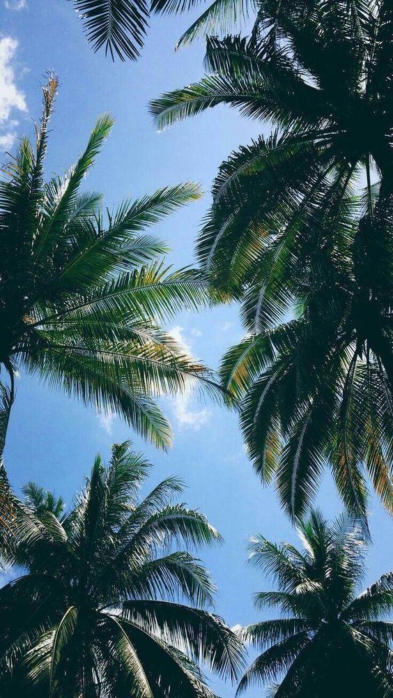 Imgur Com Nature Iphone Wallpaper Palm Trees Wallpaper Tree Wallpaper Iphone Iphone xr wallpaper trees
