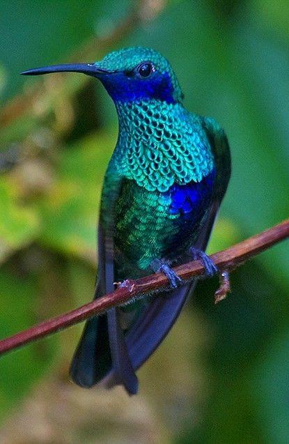 Pin De Beatriz En Colibris Colibri Fotos Aves De Colores