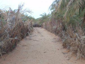 The Moor Next Door Blog ~ Maghreb Affairs ~ Geopolitics ~ International Relations