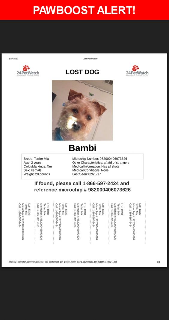 Please spread the word! Bambi was last seen in Huntington Park, CA - lost pet poster