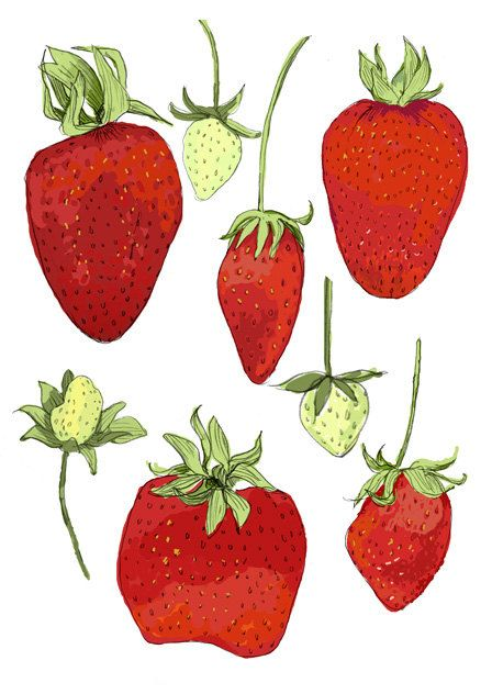 Strawberries by Rigel Stuhmiller (drenculture on Etsy)