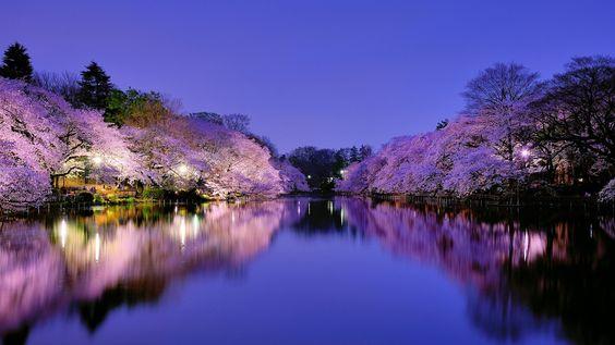 Japon, Osaka, parc de la ville pendant la nuit, lac, lumières, arbre en fleurs de cerisier Fonds d'écran - 1600x900