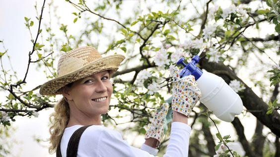 Jardim de ervas orgânico: sem pesticidas – agrotóxicos e sem fertilizantes   Senhora das Ervas, Especiarias e Cia - Alimentação Saudável, Dietas Naturais e Plantas Medicinais