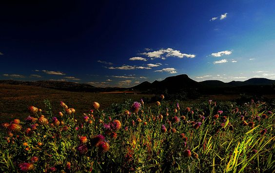Thistle and Mt. Sheridan  Wichita Mountains  photo by Jonathan Wheeler