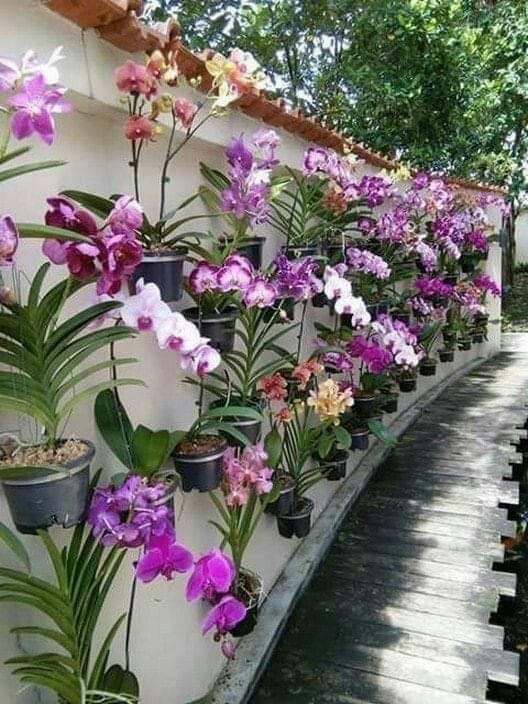 fde6d925dca5d4bb0a75dba83d85f6a1 - The Tavern Orchid Gardens Room Rates