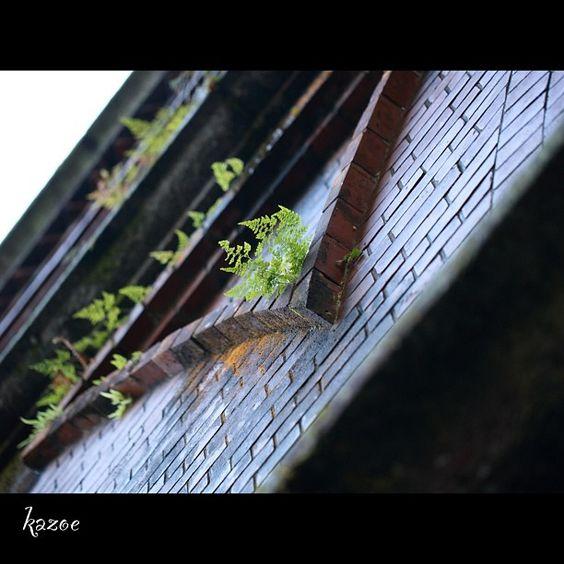 Photo by kazoe_